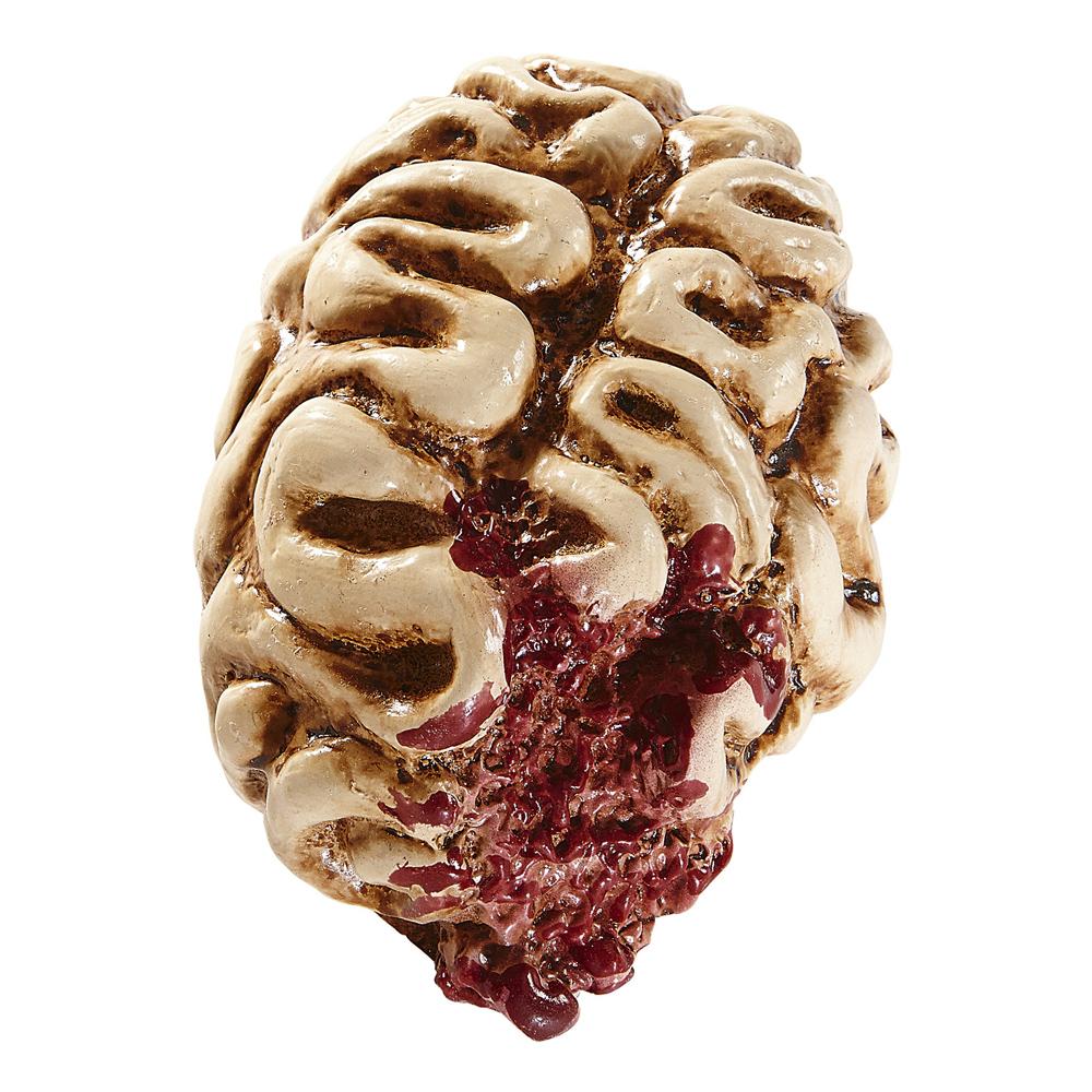 Hjärna med Köttsår